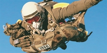 how to become a navy seal dog handler